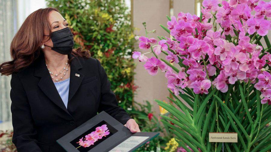 """Kamala Harris steht neben einem Exemplar der nach ihr benannten Orchidee """"Papilionanda Kamala Harris"""". (tae/spot)"""