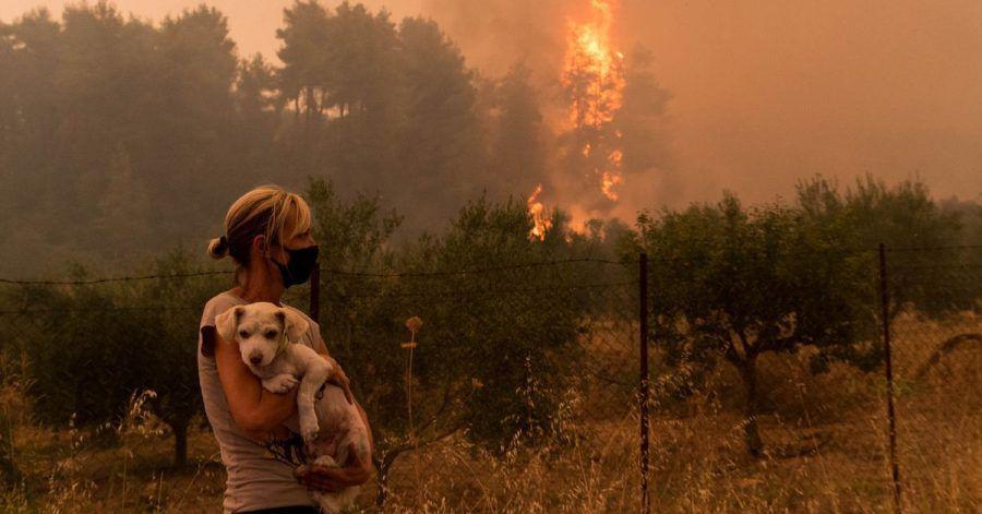 Eine Frau hält ihren Hund, während ein Wald im Norden der Insel Euböa in Flammen steht. Die Waldbrände wüten in ganz Griechenland weiter. Vor allem auf der Insel Euböa, wo am Wochenende Tausende Menschen evakuiert wurden.