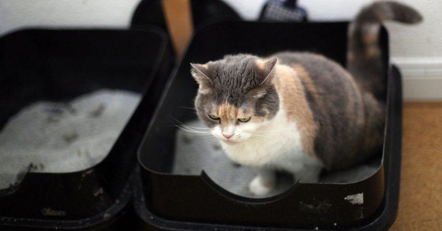 Katzen und Menschen haben auch Dinge gemeinsam - so essen auch Stubentiger nicht gern direkt neben ihrem Klo.