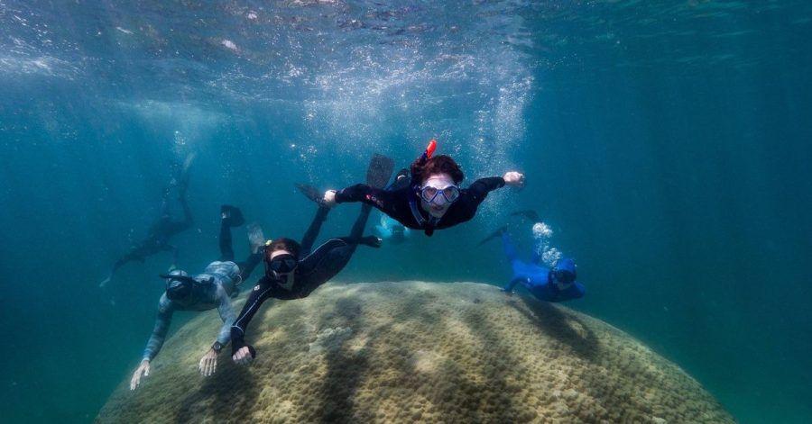 Forschende haben eine mehr als zehn Meter breite Koralle haben im Great Barrier Reef entdeckt.