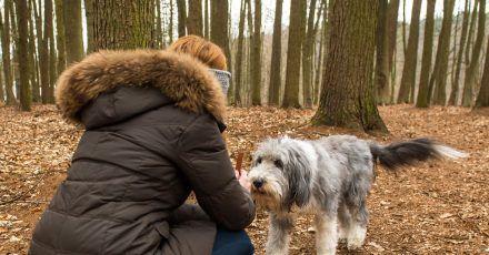 Eine Antigiftköder-Trainingsübung ist der Rückruf. Da wird etwa im Wald ein Stück Futter ausgelegt. Rennt der Hund hin, wird er vorm Erreichen zurückgerufen. Gehorcht er, bekommt er ein Leckerli.