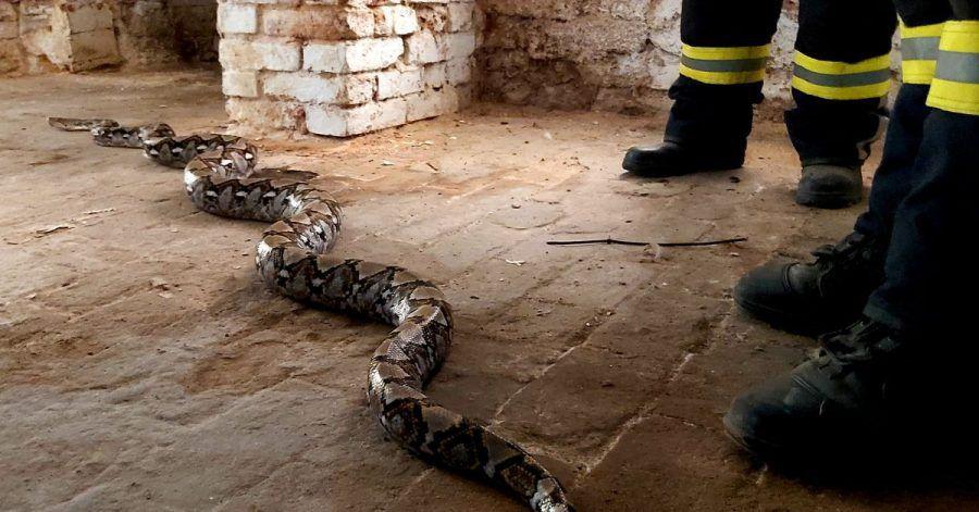 Eine Netzpython ist in einem Keller in Haldensleben gefunden worden.