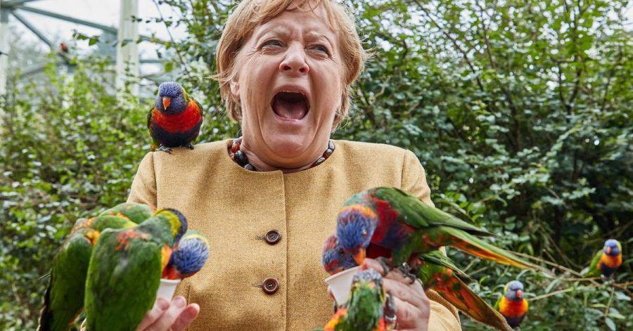 Angela Merkel (CDU), Bundeskanzlerin, füttert australische Loris im Vogelpark Marlow und wird dabei gebissen.