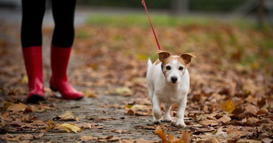 Bei den herbstlichen Gassirunden sollte man mit dem Hund einen großen Bogen um Walnussbäume machen.