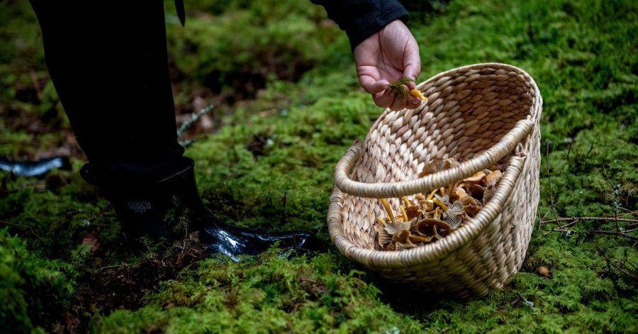 Das Bundesamt für Strahlenschutz macht Sammler auf radioaktiv belastete Pilze aufmerksam.