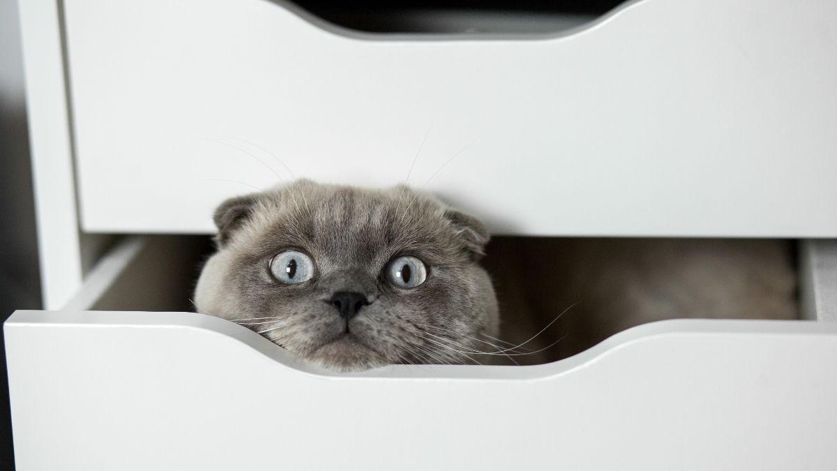 Wieso ist eine Krankenversicherung für Katzen sinnvoll?