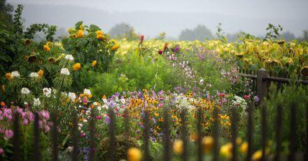 Hohe Stauden, schöne Blüten. Hier fühlen sich Insekten sehr wohl. Und schön aussehen, tut es auch.