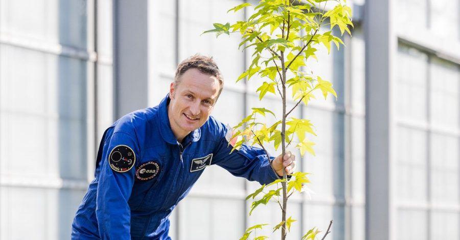 Matthias Maurer pflanzt in Köln einen Baum.
