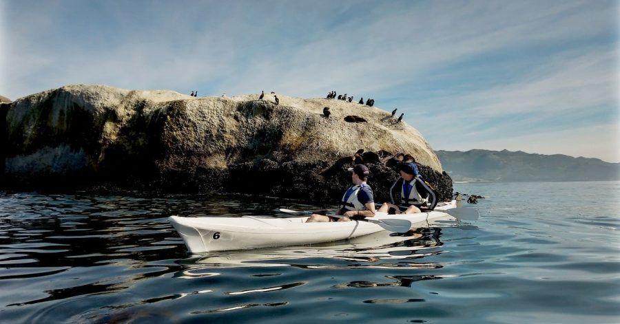 Die Seevögel sagenHallo: Die Kap-Halbinsel lässt sich gut vom Wasser aus erkunden.