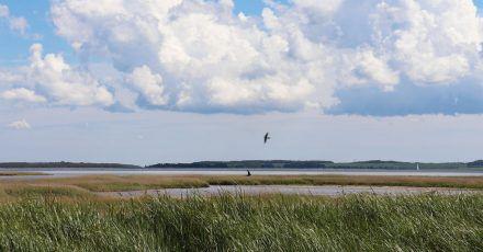 Die Vorpommersche Boddenlandschaft ist ein geschützter Naturraum.