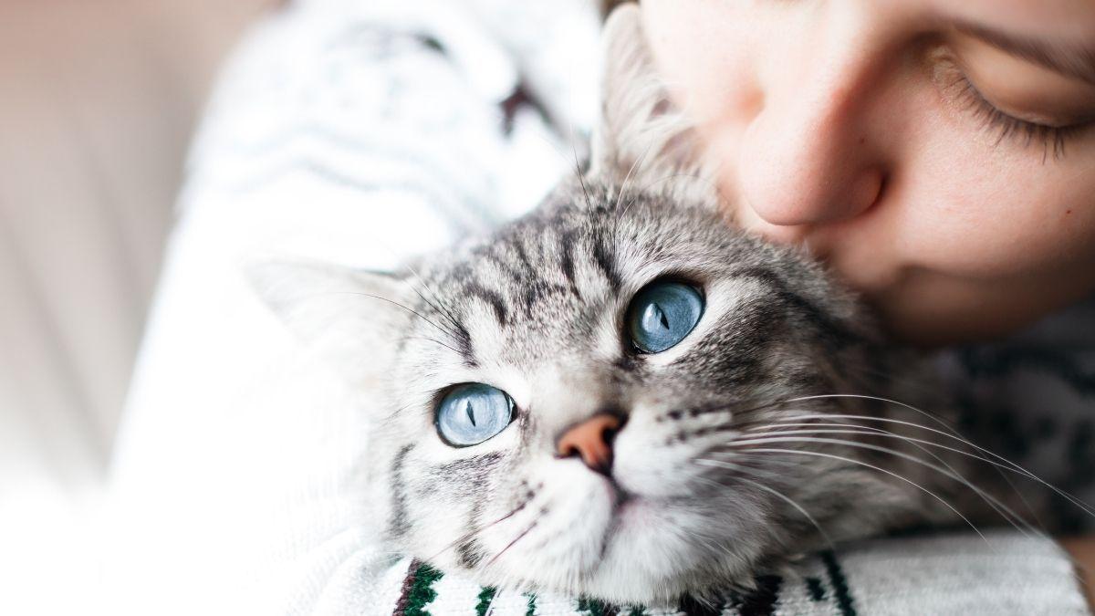Das war's mit Streicheln: Viele Katzen haben eine Menschen-Allergie