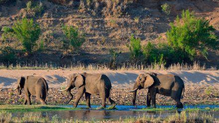 Dschungelcamp 2022 in Südafrika - Kruger Nationalpark