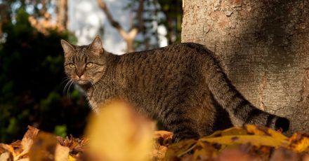 Katze lieben es, sich im Laub zu suhlen und zu verstecken. Damit auch Wohnungskatzen in den Genuss kommen, kann man ihnen eine Kiste mit Laub ins Haus stellen.