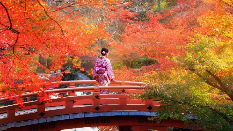 Wenn der Herbst das Land in Rottöne taucht, begehen die Japaner Momijigari. (kms/spot)