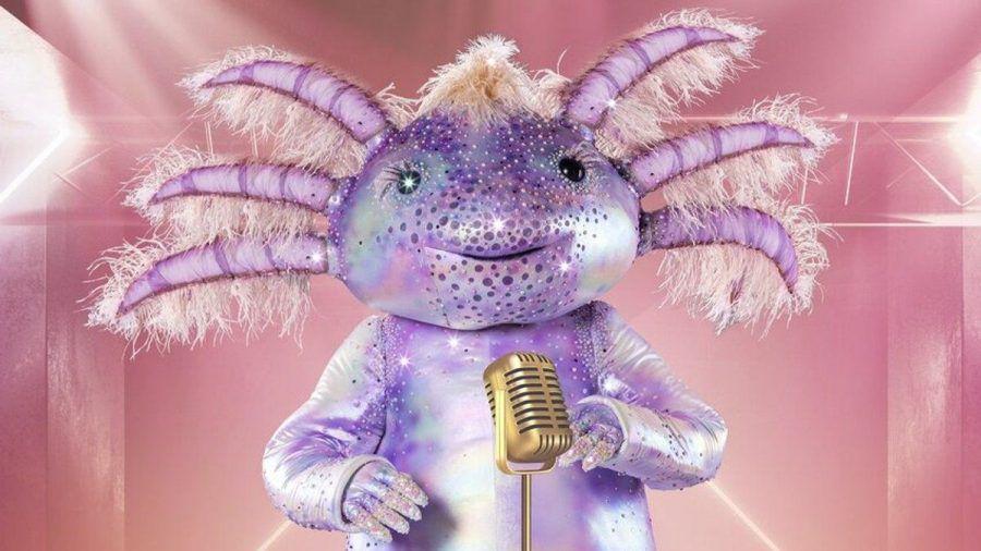 """Das Axolotl wird neben der Chili oder dem Mops auf der """"Masked Singer""""-Bühne stehen. (jom/spot)"""