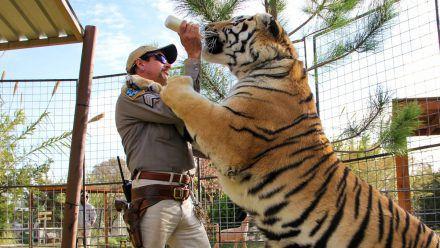 """Auch in """"Tiger King 2"""" geht es eher um Menschen als um Großkatzen... (mia/spot)"""