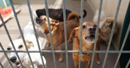 In Großbritannien werden einem Bericht zufolge derzeit viele Hunde ins Tierheim gebracht.