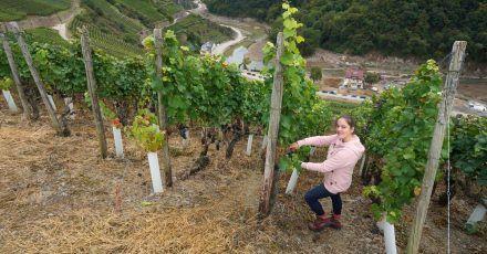 Eva Lanzerath, die gerade ihre Amtszeit als Deutsche Weinkönigin beendet hat, freut sich jedes Jahr auf die Weinlese.