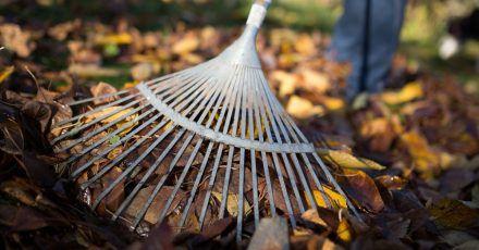Laub sollte nicht auf dem Rasen liegen gelassen werden. Die Blätter verfaulen oder schimmeln. Dadurch bekommen die Gräser keine Luft mehr.