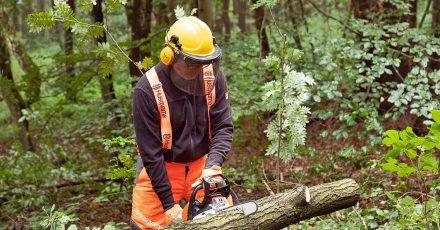 Getestet wurden die Sägen (im Bild der Testsieger von Stihl) im Wald. Insgesamt zeigten sie eine gute Leistung auch beim Fällen kleinerer Bäume und dem Teilen abgelagerter Eichenstämme.