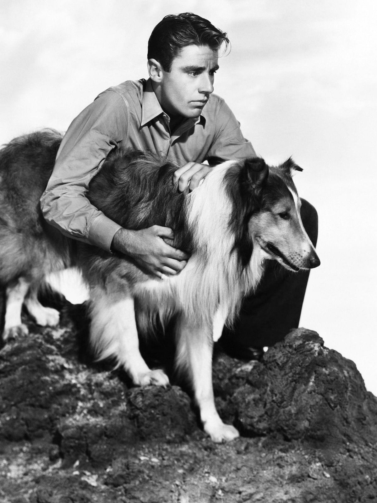 Von Laika bis Lassie: 8 Hunde, die zu Legenden wurden