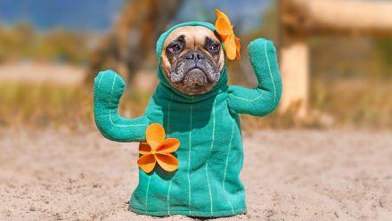 Tiere mögen keine Kostüme - auch nicht an sich selbst!
